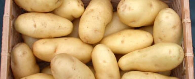 Garden Ethos and Sarpo Potatoes